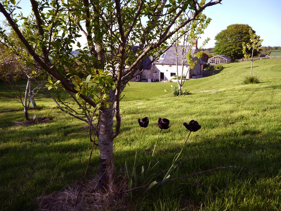 Lower Hewood Farm, Garden
