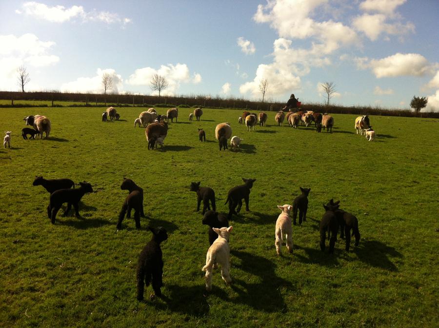 Lower Hewood Farm, Back Field