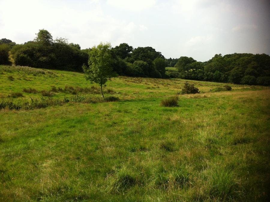 Lower Hewood Farm, Mead